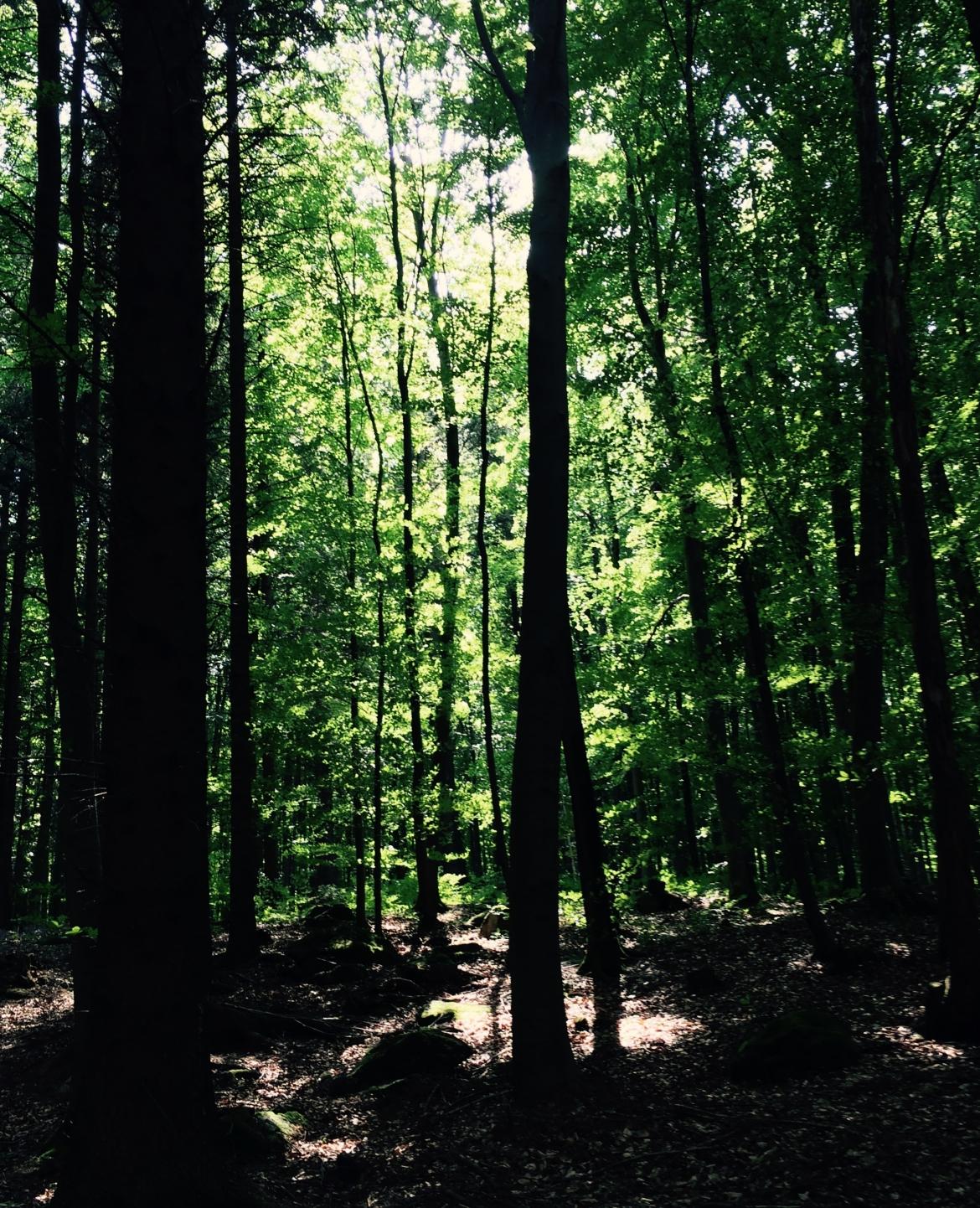 Botschaft der Bäume