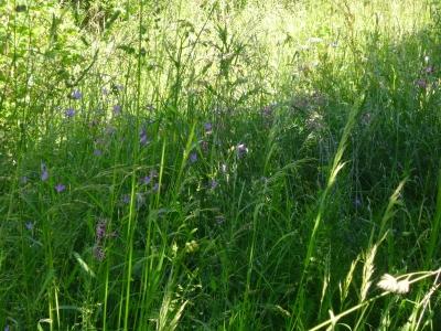 Frühlingskräuter @ Rottenhof- Oafoch aus der Natur