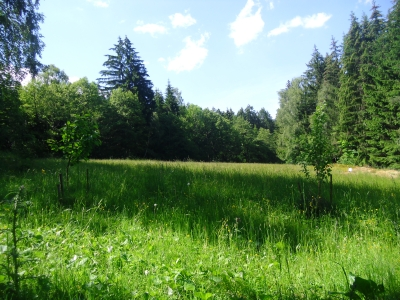 Sommer - Kräuterwanderung @ 1000Krauthof